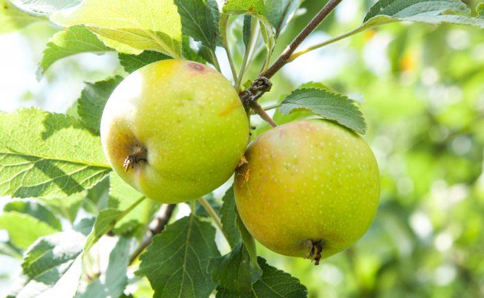 Ny og mer bærekraftig fruktemballasje er nå under utforskning av Nofima.